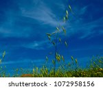 view of the nature  in the... | Shutterstock . vector #1072958156