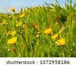 view of the nature  in the... | Shutterstock . vector #1072958186