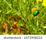 view of the nature  in the... | Shutterstock . vector #1072958222