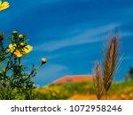 view of the nature  in the... | Shutterstock . vector #1072958246