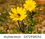 view of the nature  in the... | Shutterstock . vector #1072958252