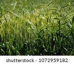 view of the nature  in the... | Shutterstock . vector #1072959182