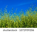 view of the nature  in the... | Shutterstock . vector #1072959206