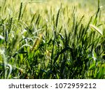 view of the nature  in the... | Shutterstock . vector #1072959212