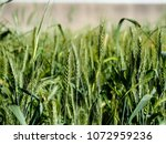 view of the nature  in the... | Shutterstock . vector #1072959236