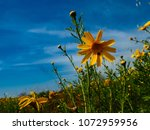 view of the nature  in the... | Shutterstock . vector #1072959956