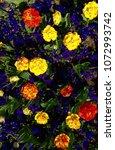 colorful tulips garden | Shutterstock . vector #1072993742