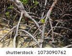 coron palawan philippines april ...   Shutterstock . vector #1073090762