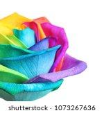 amazing rainbow rose flower on... | Shutterstock . vector #1073267636