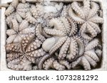 freshly caught octopus vulgaris ... | Shutterstock . vector #1073281292