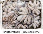 freshly caught octopus vulgaris ... | Shutterstock . vector #1073281292