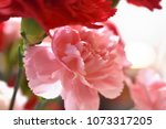 close up of carnations. | Shutterstock . vector #1073317205