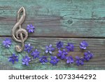 Spring Flowers Hepatica With...