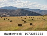 Bailed Hay Drying On Ranch Land ...