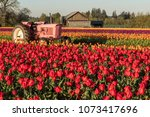 Field Of Spring Tulips In...