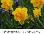 Tulip Farm In Washington State...