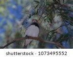 a female zebra finch perched on ... | Shutterstock . vector #1073495552