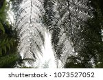 tropical leaf patterns in a... | Shutterstock . vector #1073527052