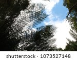 tropical leaf patterns in a... | Shutterstock . vector #1073527148