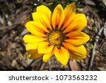 flowers in full bloom. | Shutterstock . vector #1073563232