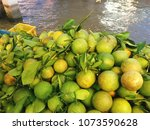 unripe orange fruits | Shutterstock . vector #1073590628