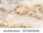 Small photo of Yellow-brown shaded picture of a hay. Behind the hay there's more same coloured blurred hays.