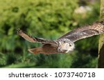 close up of an eagle owl in... | Shutterstock . vector #1073740718