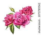 set watercolor elements of... | Shutterstock . vector #1073785562