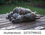 three european partridge birds... | Shutterstock . vector #1073798432