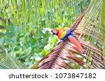 scarlet macaw in a tree  osa... | Shutterstock . vector #1073847182