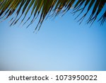 sky leaves close up | Shutterstock . vector #1073950022