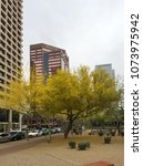 Small photo of PHOENIX, AZ, USA - APRIL 16, 2018: Palo Verde or Parkinsonia aculeata tree golden crone with blooming yellow flowers in Phoenix downtown, Arizona capital city