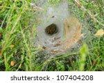 Funnel Weaving Spider Deep...