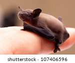 Sweet Baby Bat On My Finger.