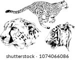 vector drawings sketches... | Shutterstock .eps vector #1074066086