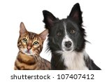 Stock photo close up portrait of dog and cat in front of white background 107407412