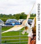 barn owl in flight | Shutterstock . vector #1074093542