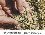 hand of the breeder. hands hold ... | Shutterstock . vector #1074106772