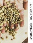 hand of the breeder. hands hold ... | Shutterstock . vector #1074106775