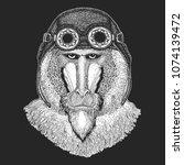 monkey  baboon  dog ape  ape... | Shutterstock .eps vector #1074139472