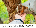 a squirrel eats from the hand... | Shutterstock . vector #1074156356