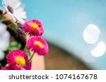 photograph of some flowers in... | Shutterstock . vector #1074167678