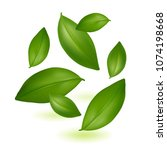 green young tea leaves. tea.... | Shutterstock .eps vector #1074198668