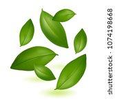 green young tea leaves. tea.... | Shutterstock .eps vector #1074198668