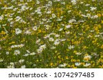 a wildflower meadow in in the... | Shutterstock . vector #1074297485