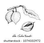 tropical fruits  illustration... | Shutterstock .eps vector #1074332972