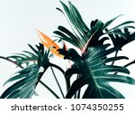 exotic tropical flower... | Shutterstock . vector #1074350255