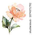watercolor floral illustration ... | Shutterstock . vector #1074371792