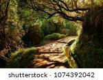 levada trails on madeira island | Shutterstock . vector #1074392042