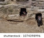 penguin in the zoo | Shutterstock . vector #1074398996